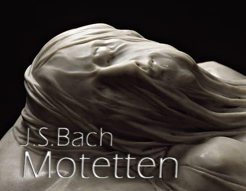 Bach: Motetten in zijn eigen wereld